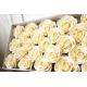 Svatební dárková mýdla Růže bílá 50ks